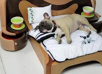 Mobília e acessórios para cães e gatos
