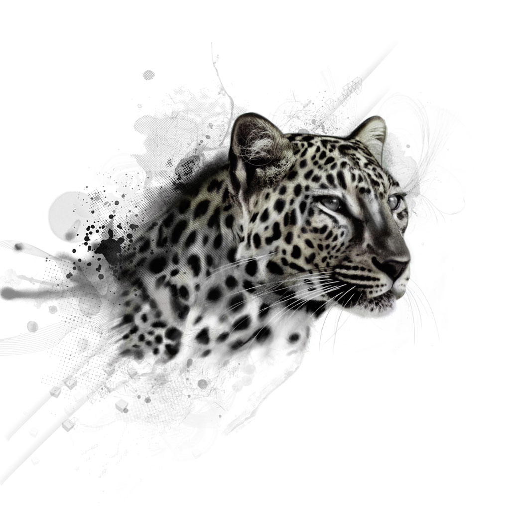 http://2.bp.blogspot.com/-gmJ5fY0G41g/Trz1mp1IYrI/AAAAAAAAA30/mSvHgFoeedo/s1600/leopard_ipad_wallpaper_animal_1024x1024.jpg