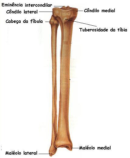 Anatomia Humana: Sistema esquelético MMII - Parte livre