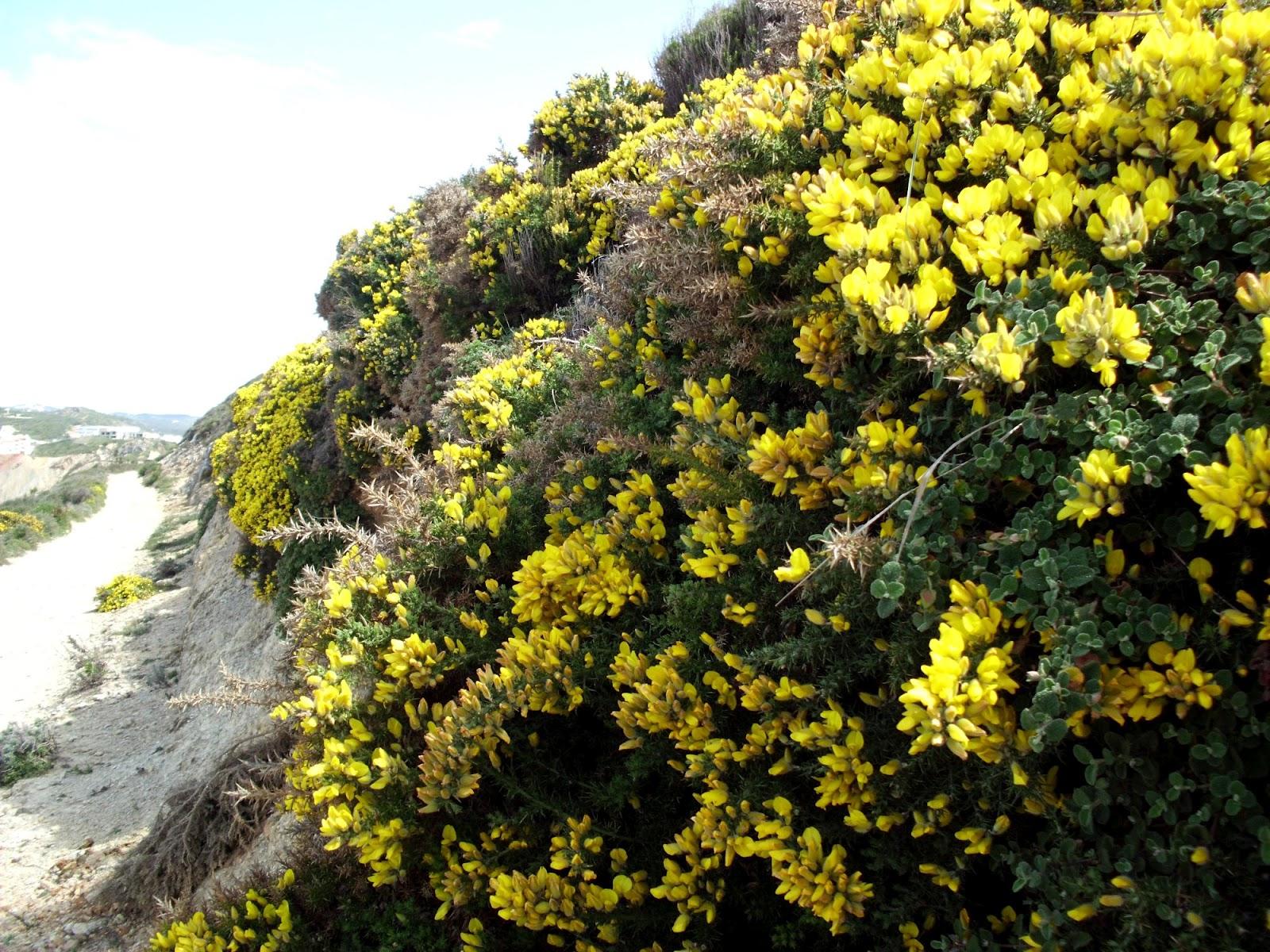 plantas jardim litoral : plantas jardim litoral:Jardim Suspenso: Flores da nossa costa.