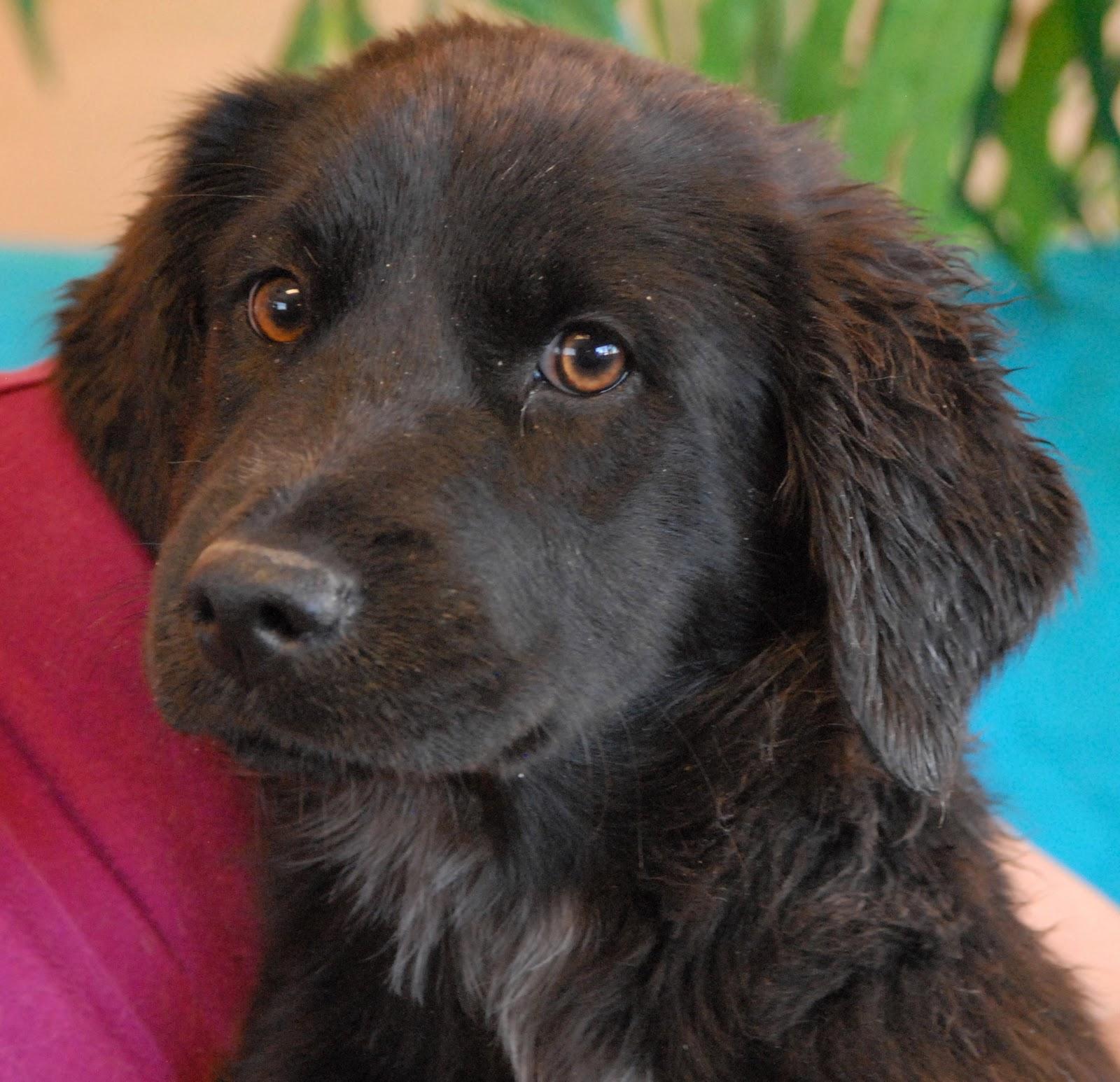 Adoption: Nevada SPCA Animal Rescue: Splish, Splash & Rubber Duckie