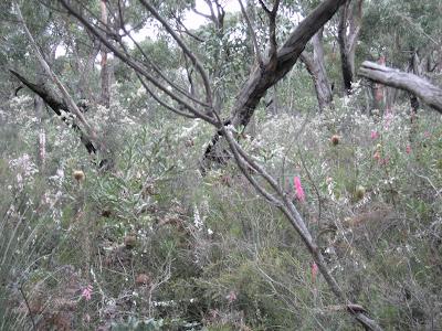 August wildflowers, Victoria, Australia