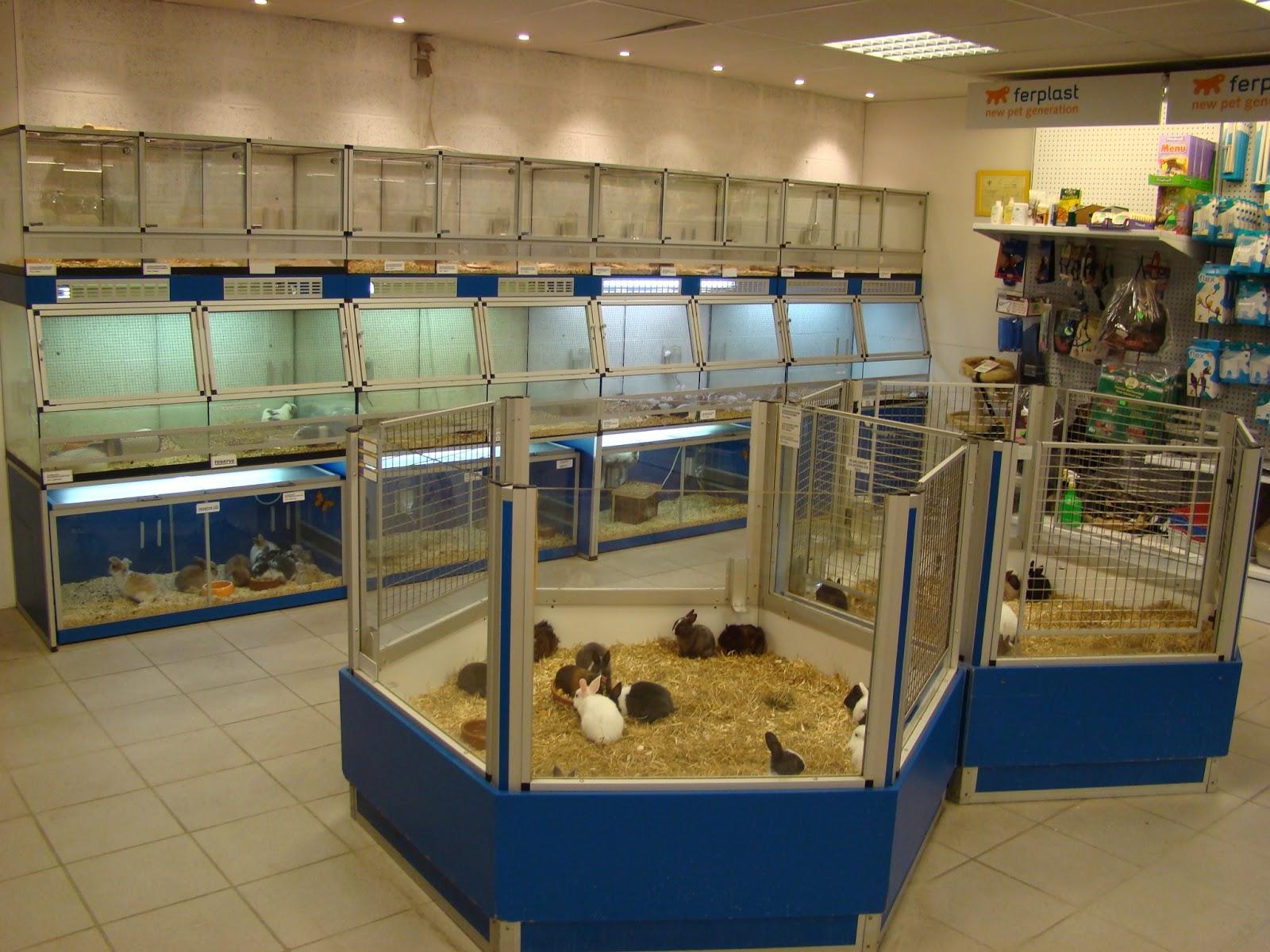 Les nouveaux animaux de compagnies l 39 achat d 39 un furet - Prix d un furet ...