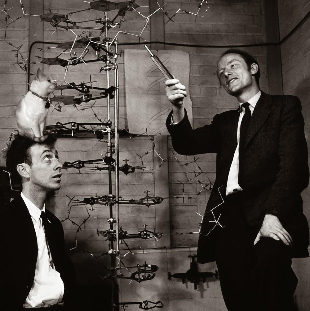 Watson and Crick DNA double helix model 1953 Chloe cat science Josef Spalenka