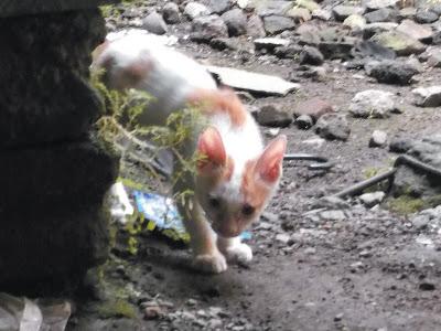 Foto-Foto Anak Kucing Lucu di Luar Jendela Kamar Kost Gue 13