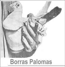 BorrásPalomas España