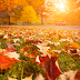 5 Energy-Saving Fall Projects