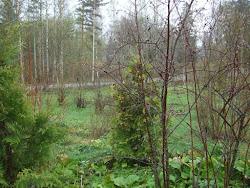 Aamun utua eilisen sateen jäljiltä.