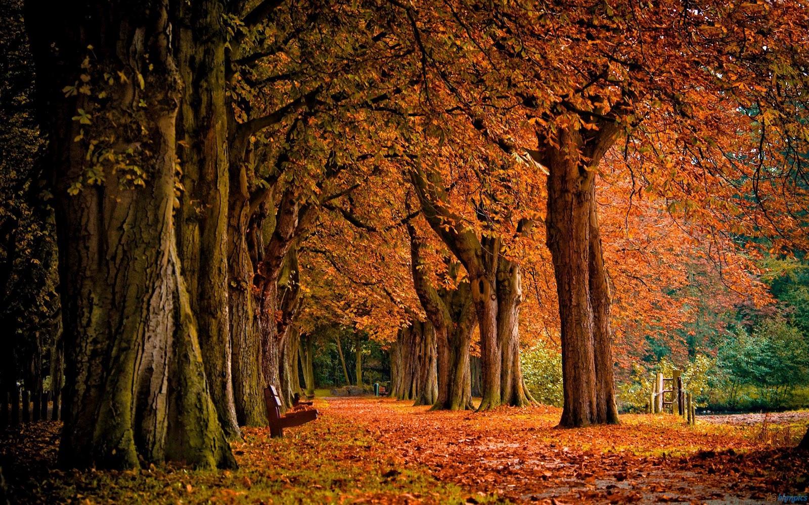 http://2.bp.blogspot.com/-gpMAONWkswo/UCnaYCNXFWI/AAAAAAAACpo/yaFRRd380iI/s1600/park_autumn-2560x1600.jpg