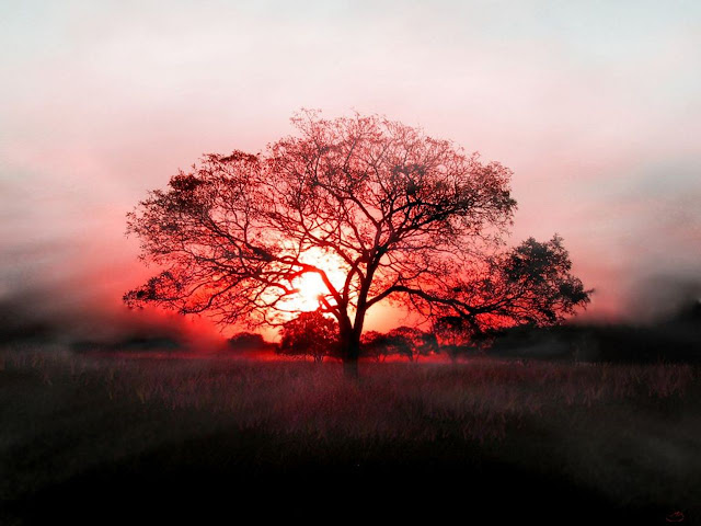 Sunrise showing on tree HD Wallpaper