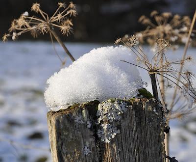 Schneehaube auf einem Weidepfosten – Schneekristalle glitzern im Sonnenlicht