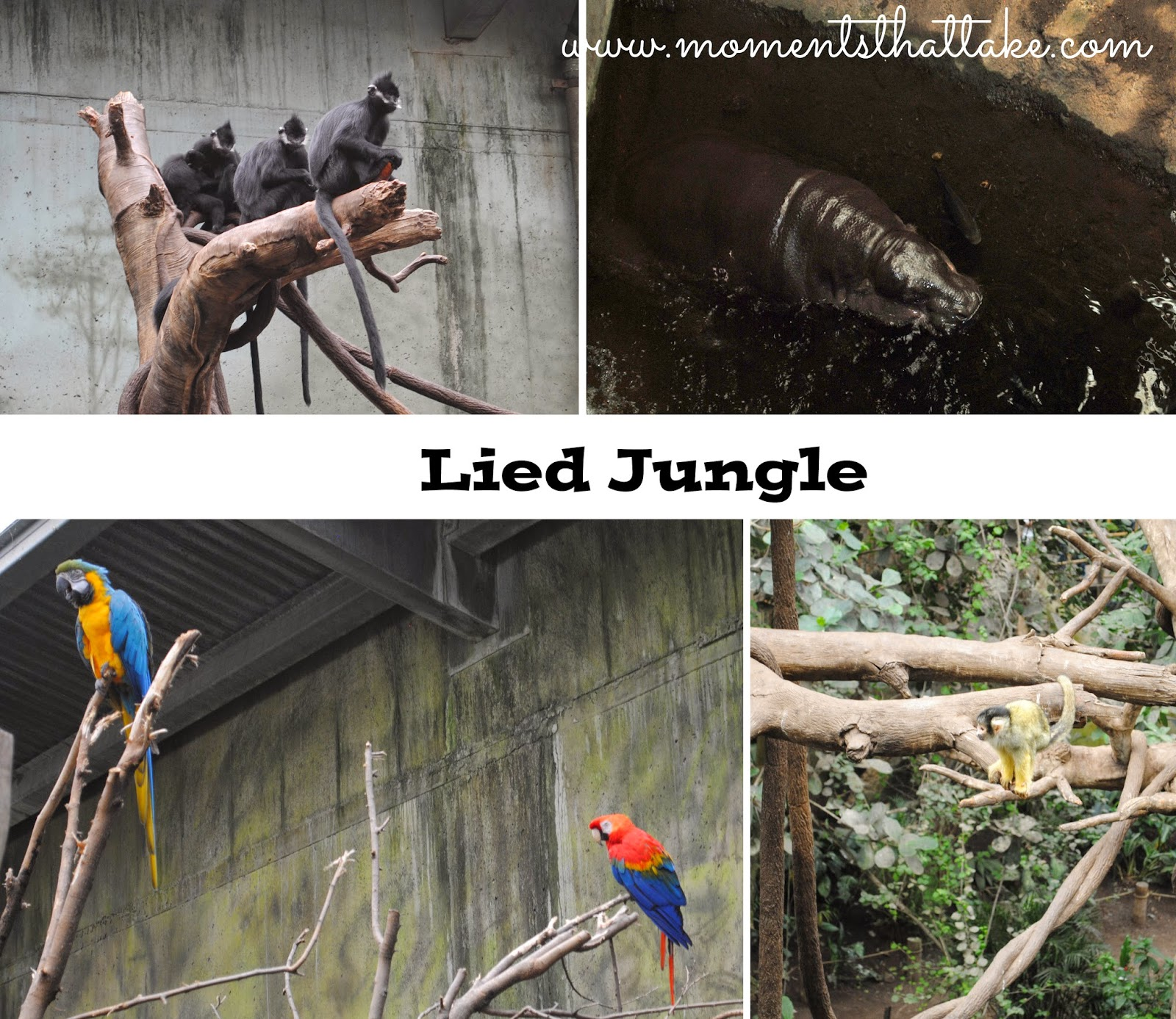 Omaha Zoo Lied Jungle