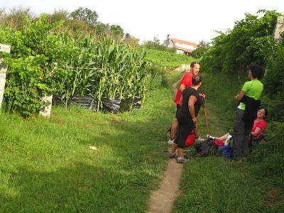 Cornfield near Caldas do Reis