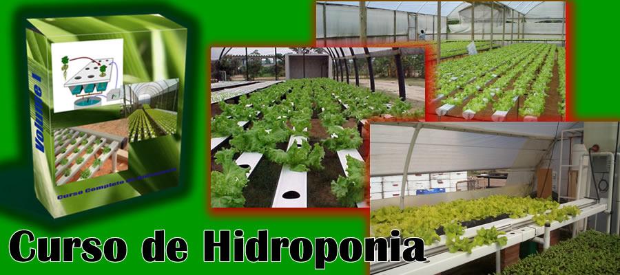 cultivo em hidroponia,curso hidroponia,hidropônicos,cultivo de hidroponia,cultivar em hidroponia