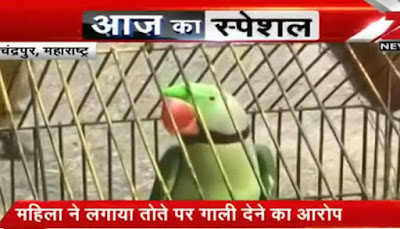 Parrot arrested in Pakistan for insulting a Grandma