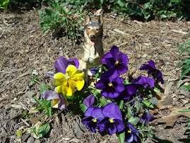 PICS FROM PAST WEEKS: Dogs Amidst Pansies