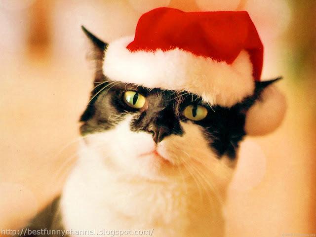 Cat Santa Claus.