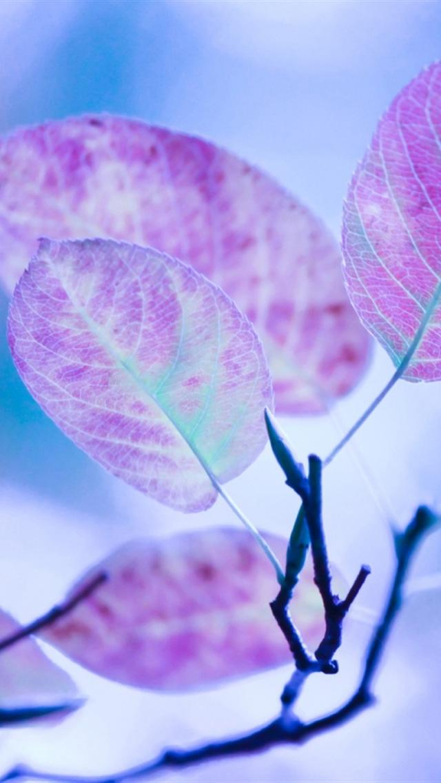 iphone 5 wallpapers hd: cute purple leaves iphone 5 ...