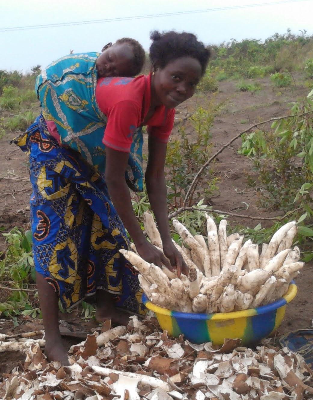 Agrikultur Programm