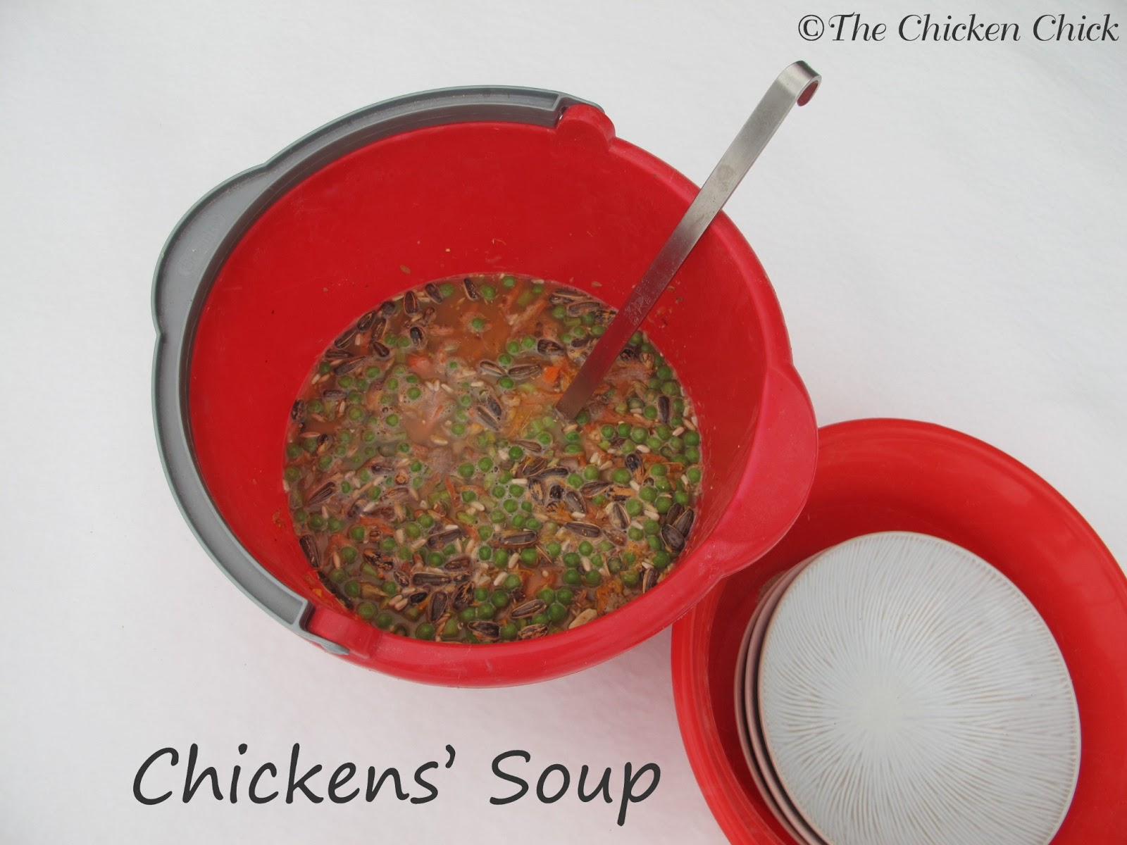 the chicken chickens u0027 soup a healthy winter treat for