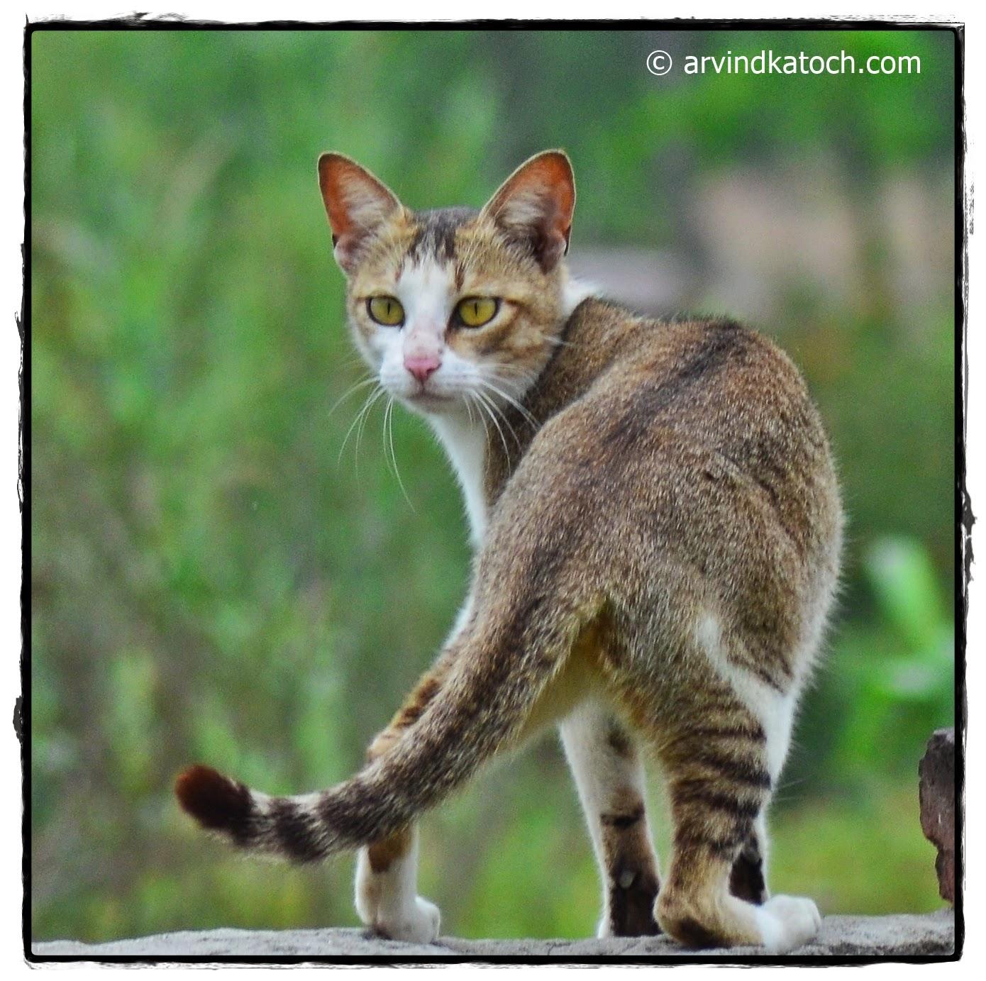 curious cat, cat, brown white cat