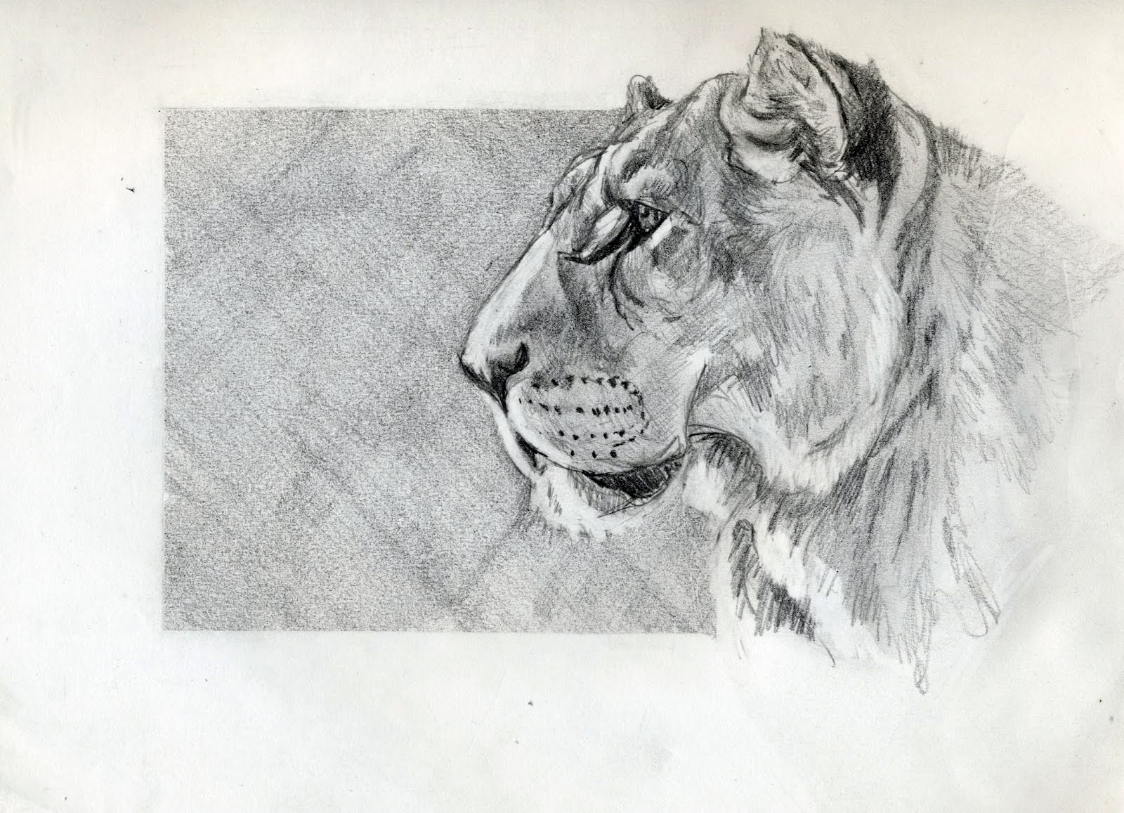 Cat-in-a-Box: Quick Lion Sketch