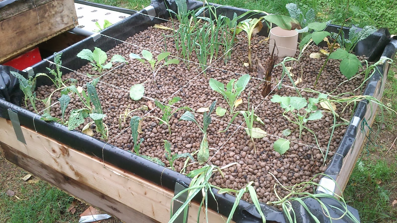 Progetto acquaponica aggiornamento dello stato delle piante for Piante leroy merlin