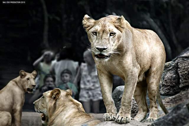 Bali Zoo Park Admission (Biaya Tiket Masuk Kebun Binatang Bali)