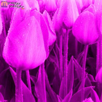 baixe imagens grátis, belas flores e paisagens