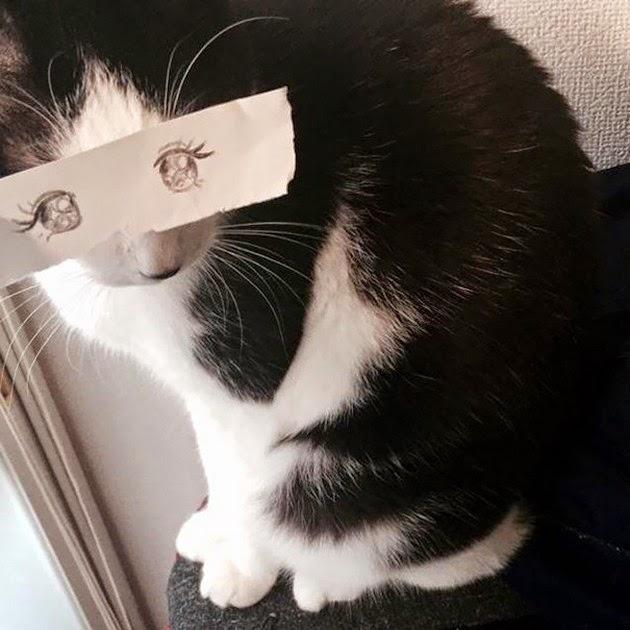 funny cartoon eyes for cats -2