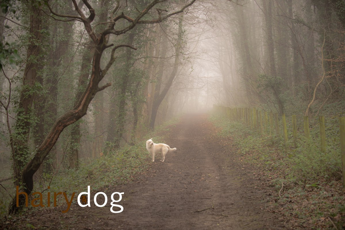 Dog photographer Jamie Emerson of Hairy Dog