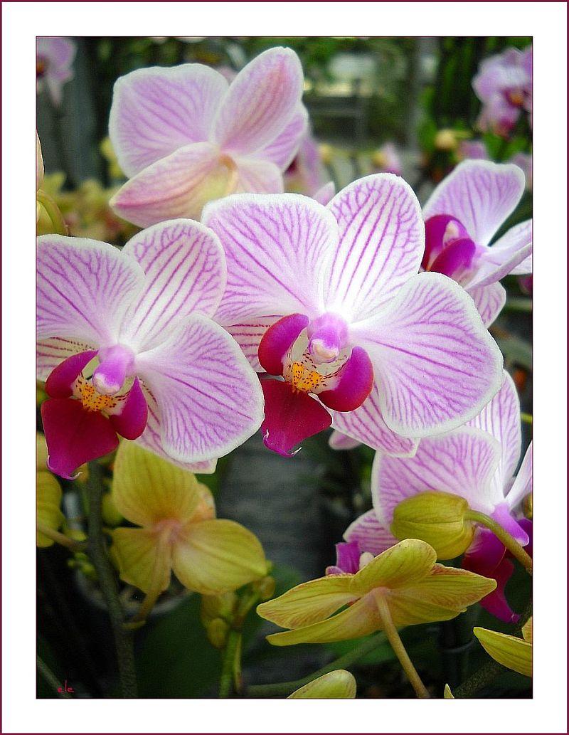 einen moment verweilen neuland f r mich orchideen. Black Bedroom Furniture Sets. Home Design Ideas