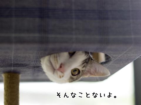 手作りキャットタワーから覗く猫
