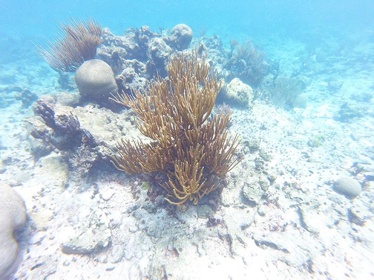 Buck Island Reef Snorkeling