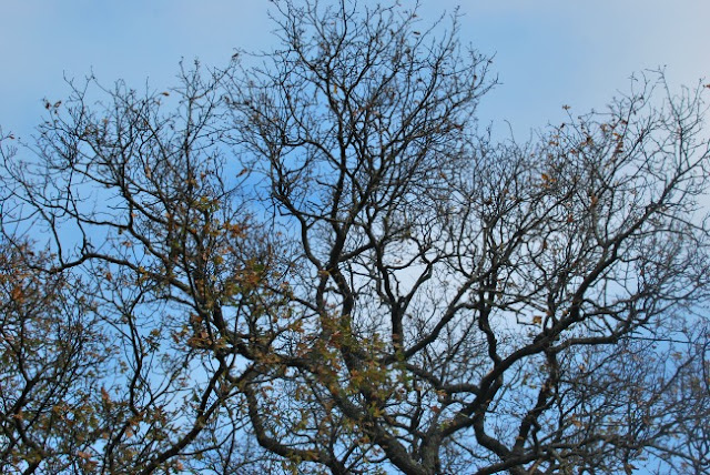 Tree branches against a blue sky with just a few clouds