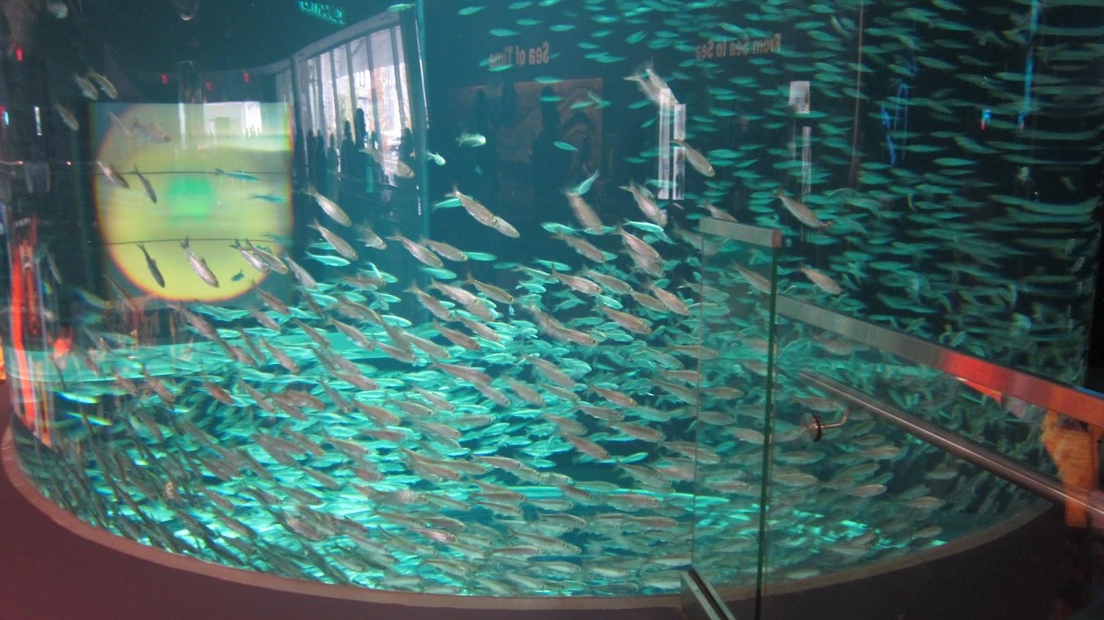 ripley's aquarium canada
