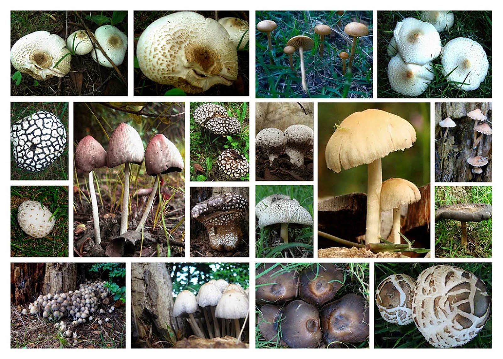 Fungus glam