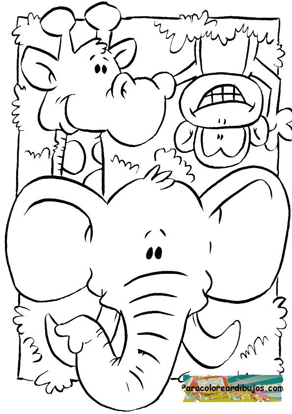 Colorear El Mono El Elefante Y La Jirafa En Dibujos Para Imprimir Y