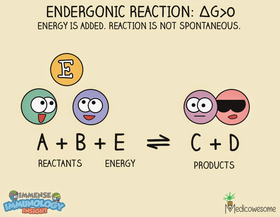 endergonic reaction thermodynamics enthalpy enthalpy h is a sum of