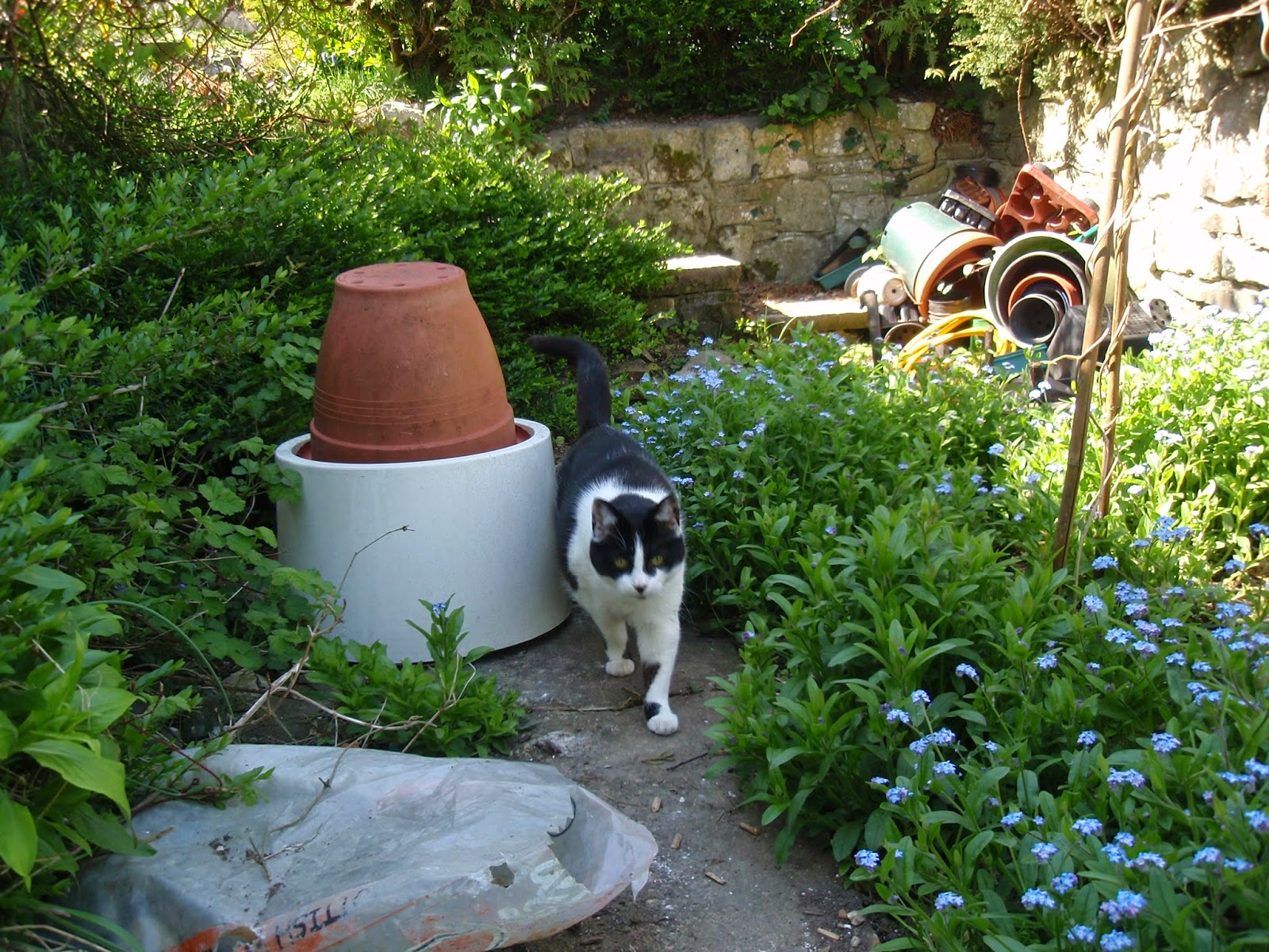 Forget-me-nots and my cat!