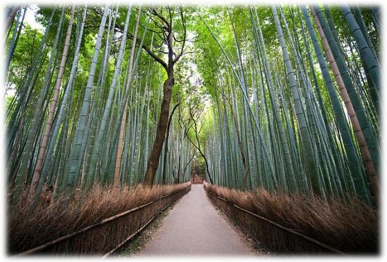 Revolusi Ilmiah - Bambu banyak manfaatnya
