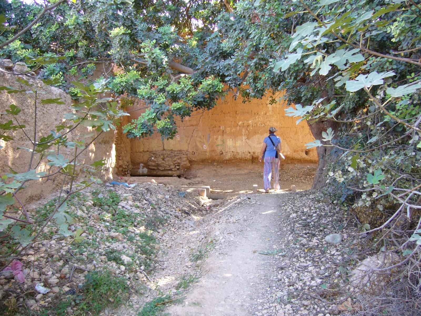 Jardin potager comestible partager d cembre 2015 for Jardin potager 2015