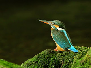 Colorful Kingfisher New Desktop Wallpaper