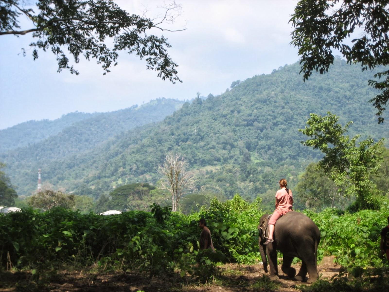 chiang-mai-elephant-jungle-jumbo-camp-mae-rim