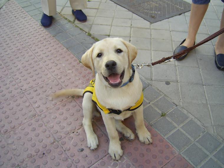 """¡Ziva, de mayor quiere ser """"Perro Guía""""!"""