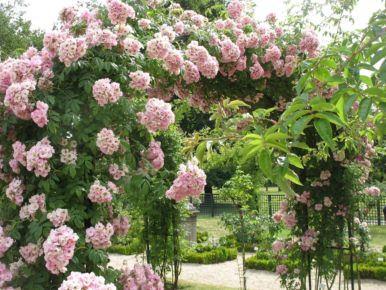 Le blog de parcs et jardins de l 39 oise roseraie de l 39 hay les roses - Beau jardin de particulier ...