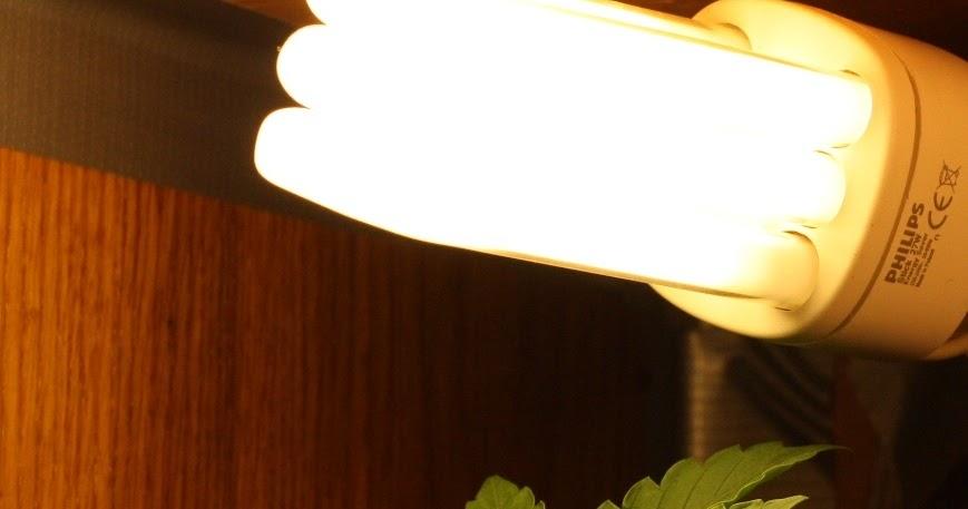 Marihuana Beleuchtung   Cannabis Samen Bestellen Cannabis Anbau Licht Beleuchtung Deiner
