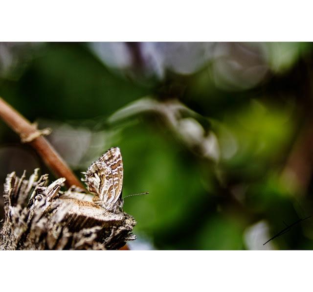 Mariposas e insectos en fotosmacro.blogspot.com