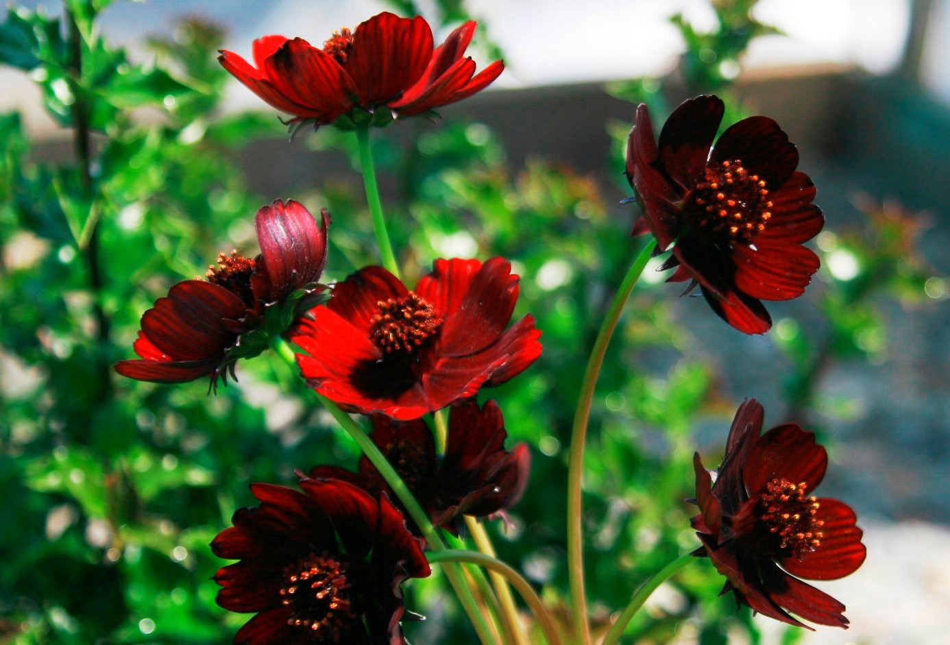10 bunga paling langka di dunia info tak terduga. Black Bedroom Furniture Sets. Home Design Ideas