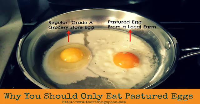 Why You Should Only Eat Pastured Eggs | www.therisingspoon.com
